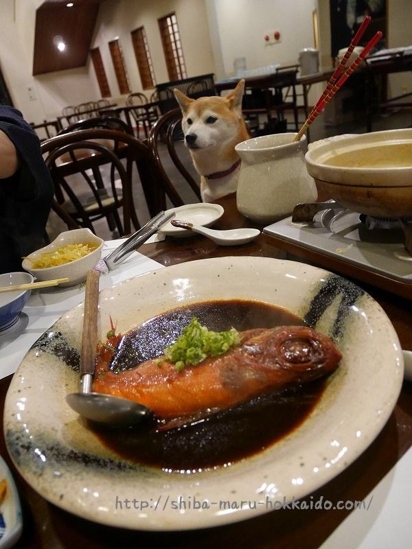 柴犬まると箱根旅行!「仙石原大箱根一の湯」に泊まってきました!