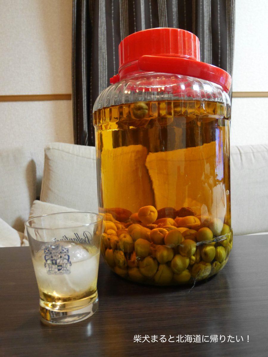 たくさん梅をいただいたので初心者だけど梅酒を作ってみました!