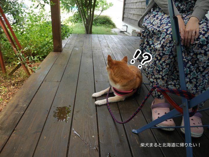 西伊豆でスイーツ!「Satouya(さとうや)  」に柴犬まると行ってきた!