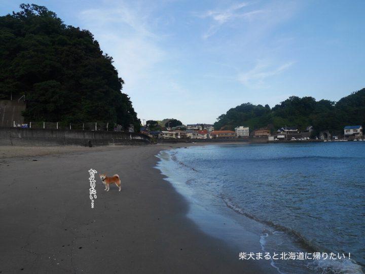 東洋のコートダジュール「岩地海水浴場」に柴犬まると早朝散歩に行ってきた!