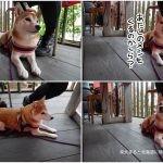千倉町の「薪窯 PizzaIndy's(ピザインディーズ)」に柴犬まると行ってきました!