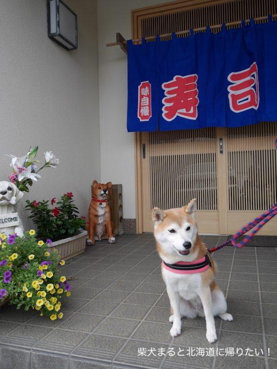 柴犬まると一緒に千葉館山の「鮨和」で地物寿司を食べてきました!