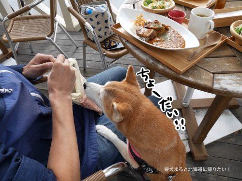 神楽坂 茶寮ららぽーと立飛に柴犬まるとランチにいってきた!