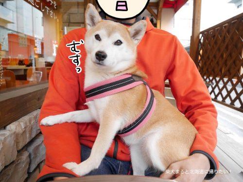 立川の「パスタフローラ」に柴犬まると生パスタランチにいってきました!