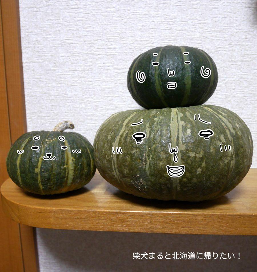 道産子アラサーがかぼちゃだんごを夜な夜な作ってみました