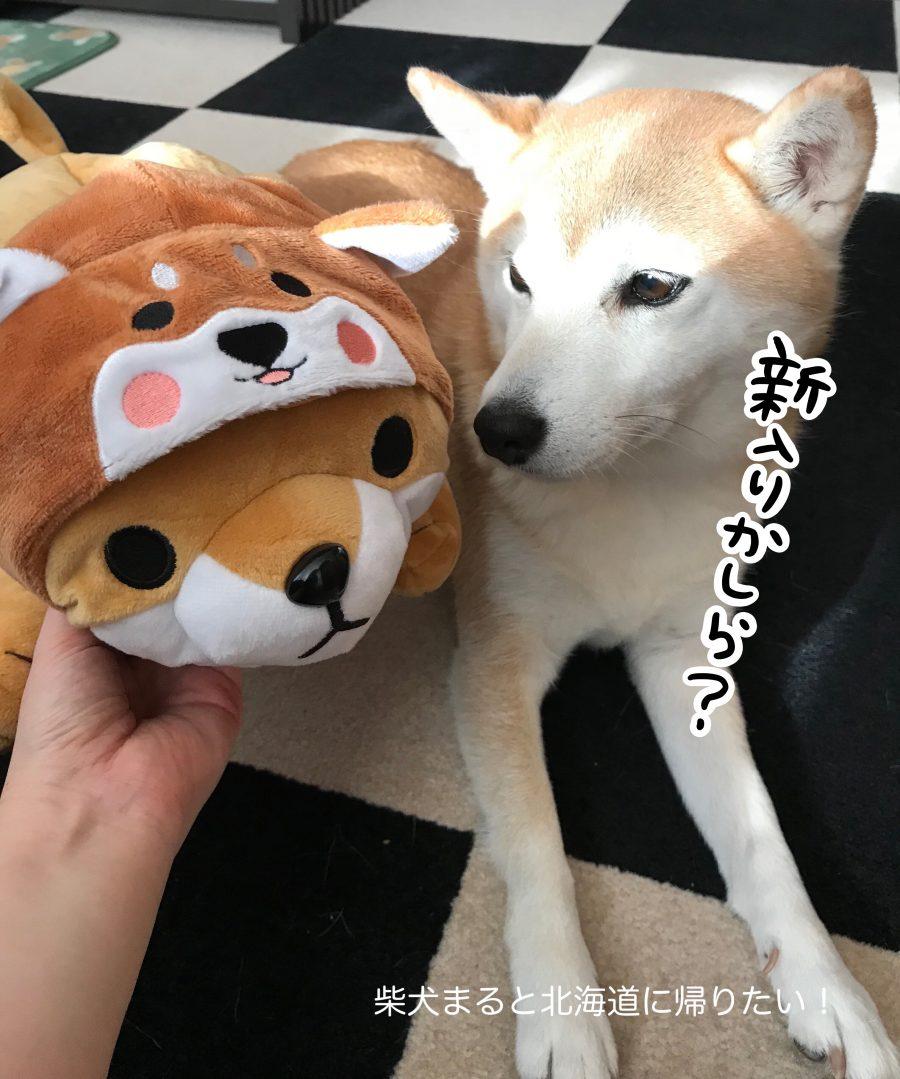 3COINSのお正月アイテム「ペットキャップ」の柴犬が可愛すぎる!