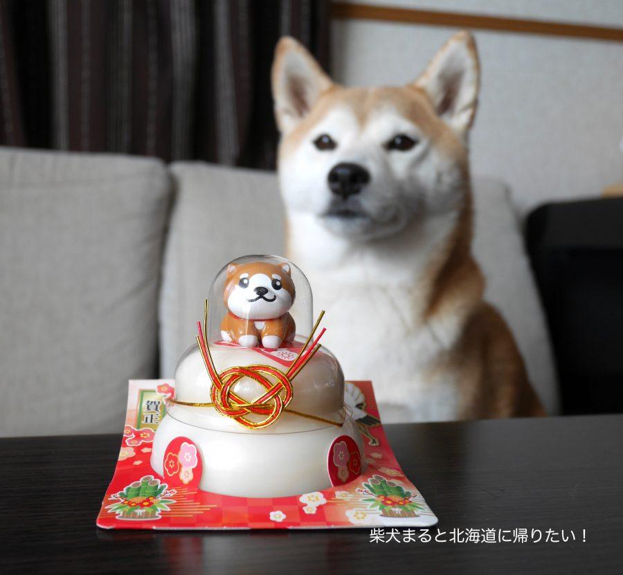 2018年は戌年なので柴犬のお鏡餅を買ってみました〜!