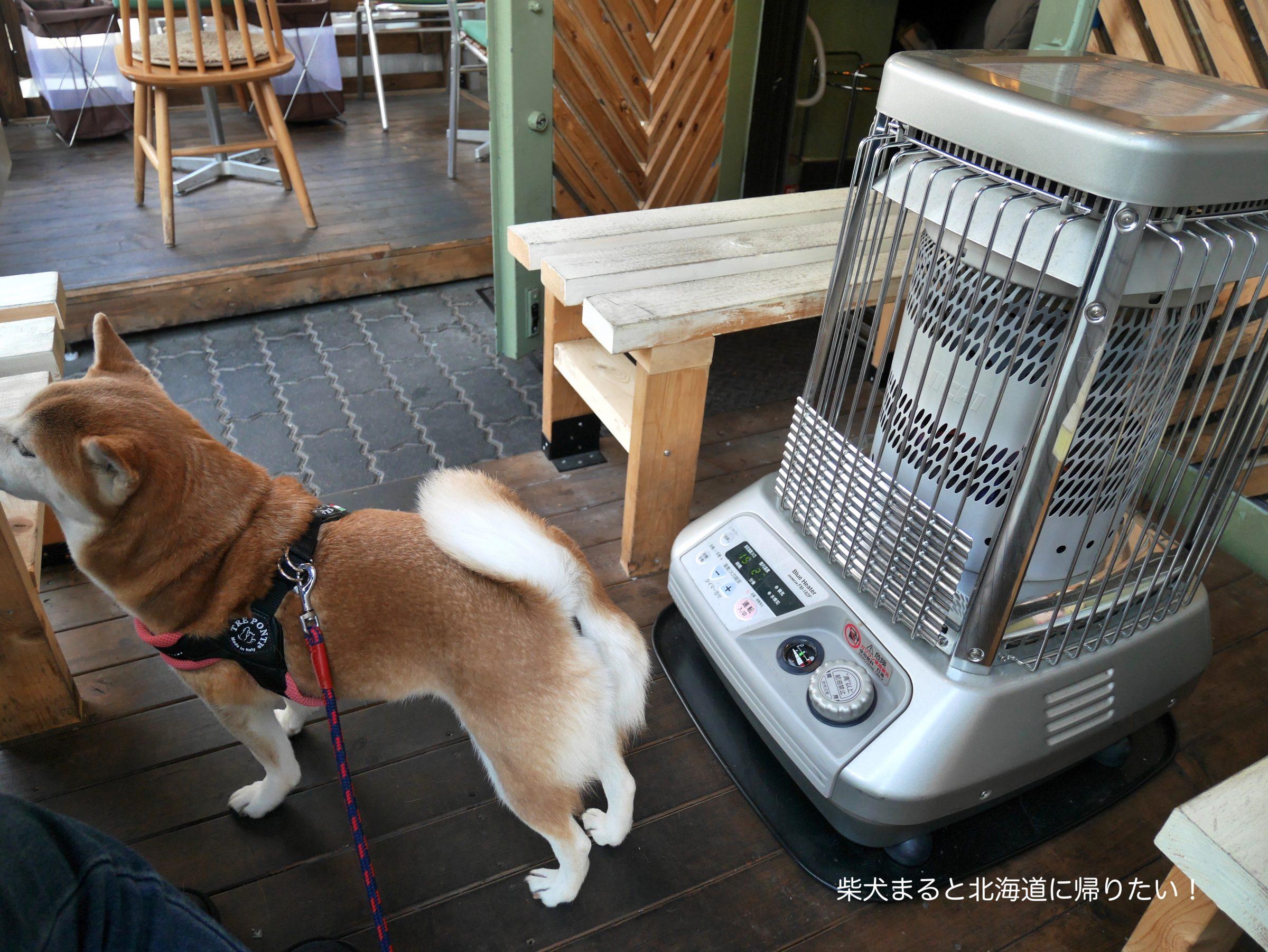 【1/22追記】立川の本格炭火焼きハンバーガー専門店『Delicier's(デリッシャーズ)』に柴犬まるといってきました!