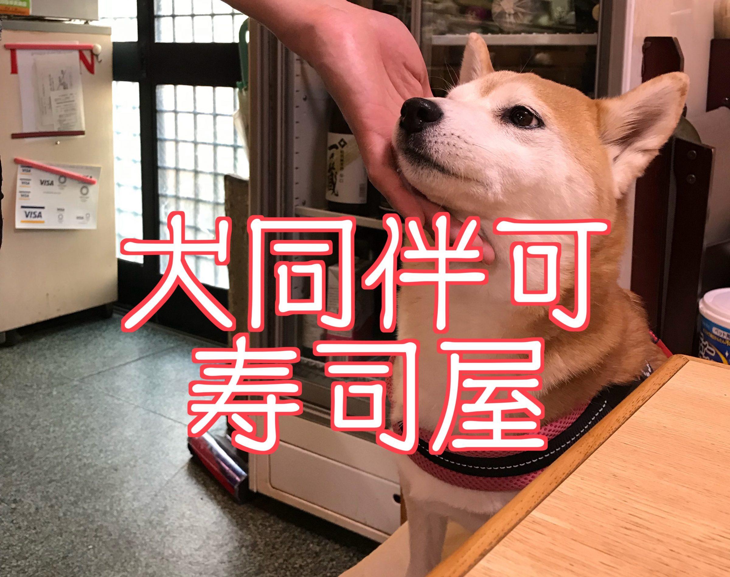 立川松栄寿司に柴犬まるさんと行ったので久しぶりにレポしてみる