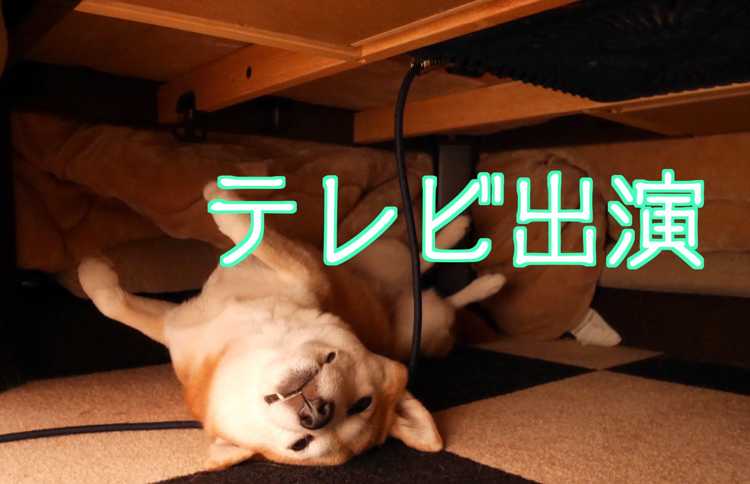 「かわいいアニマル大集合!どうぶつのじかん」に我が家の柴犬まるが出たので自慢してみる