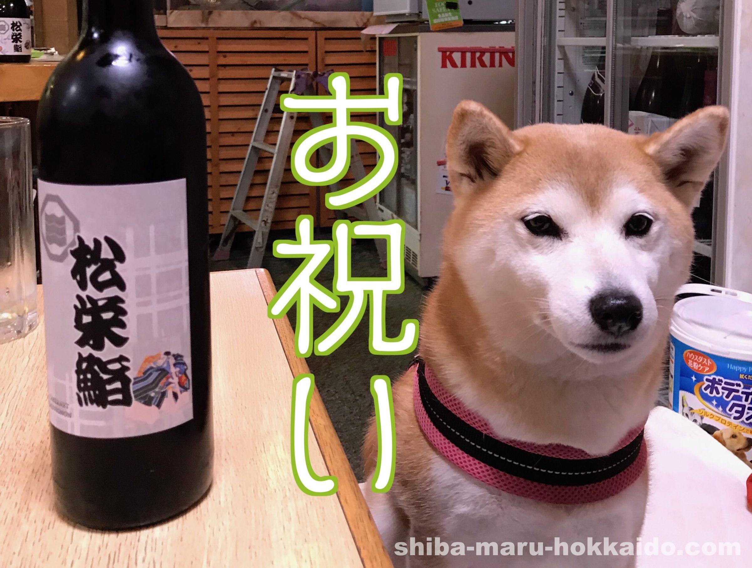 4年目の結婚記念日も松栄寿司で柴犬まるさんと一緒にお祝いしました!
