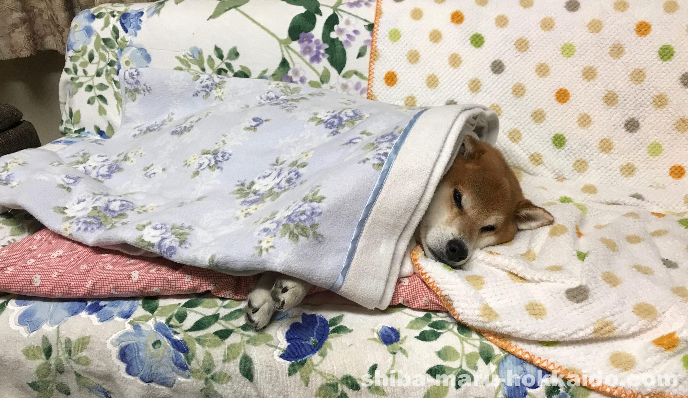 北海道の実家で飼われている柴犬太郎が「いぬのきもちWEB MAGAZINE」で紹介されました!