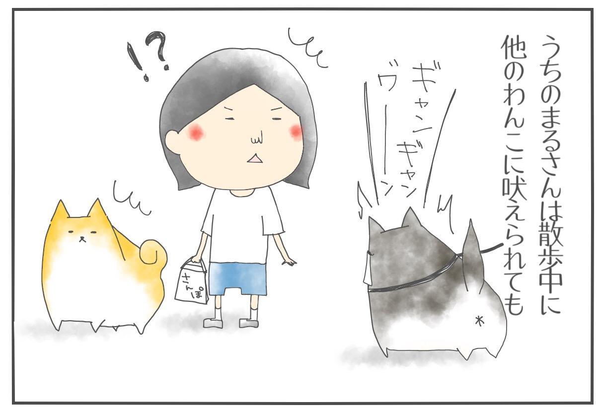 【柴犬4コマ】散歩中の柴犬まるさんの怒りポイントがわからん話