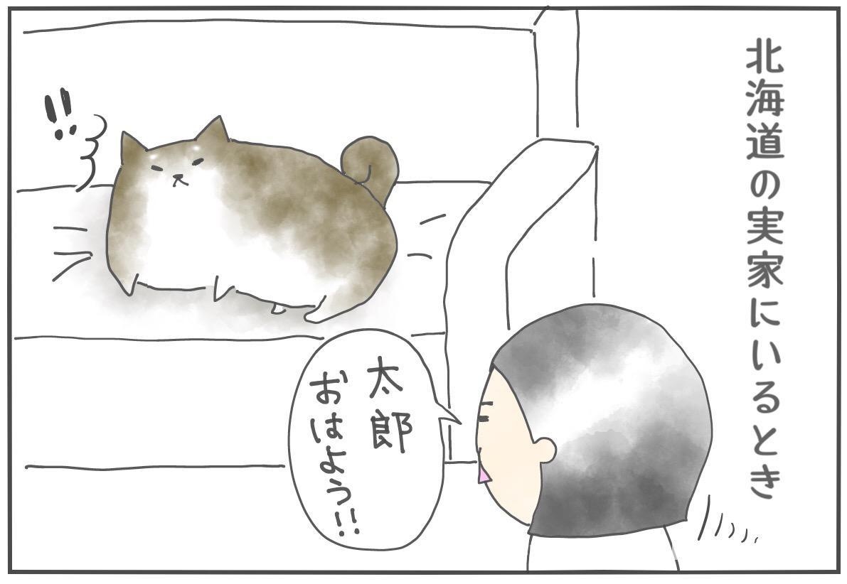 【柴犬4コマ】北海道の柴犬太郎さんは常に省エネモード。