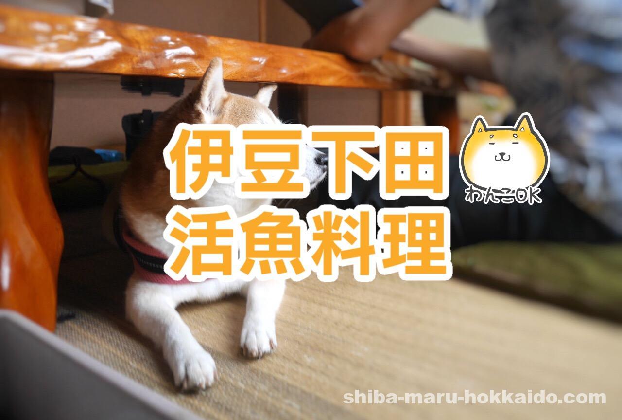 伊豆下田で愛犬とランチ「活魚料理 新田」に柴犬まるといってきました!