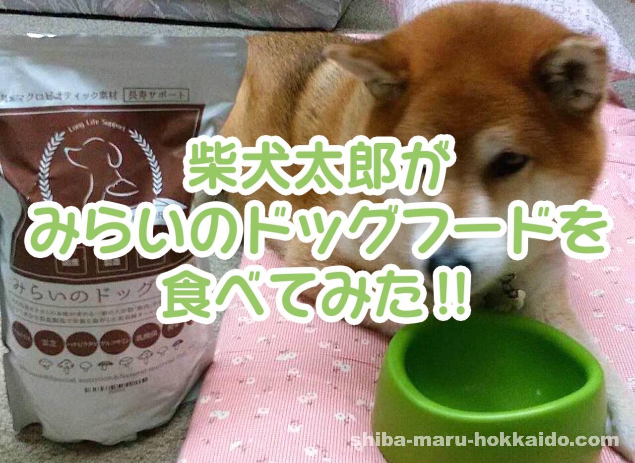 フードに興味を持ってくれない柴犬太郎に「みらいのドッグフード」をあげてみた!