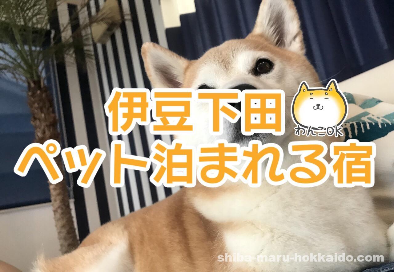 伊豆下田のコンドミニアム「シーシェルリゾートヴィラ」に柴犬まると泊まってきました!