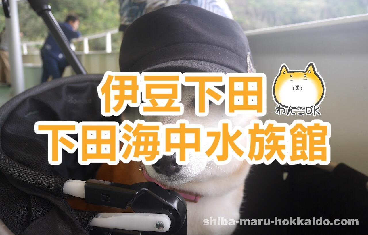 ペットと伊豆下田観光!柴犬まると「下田海中水族館」にいってきました!