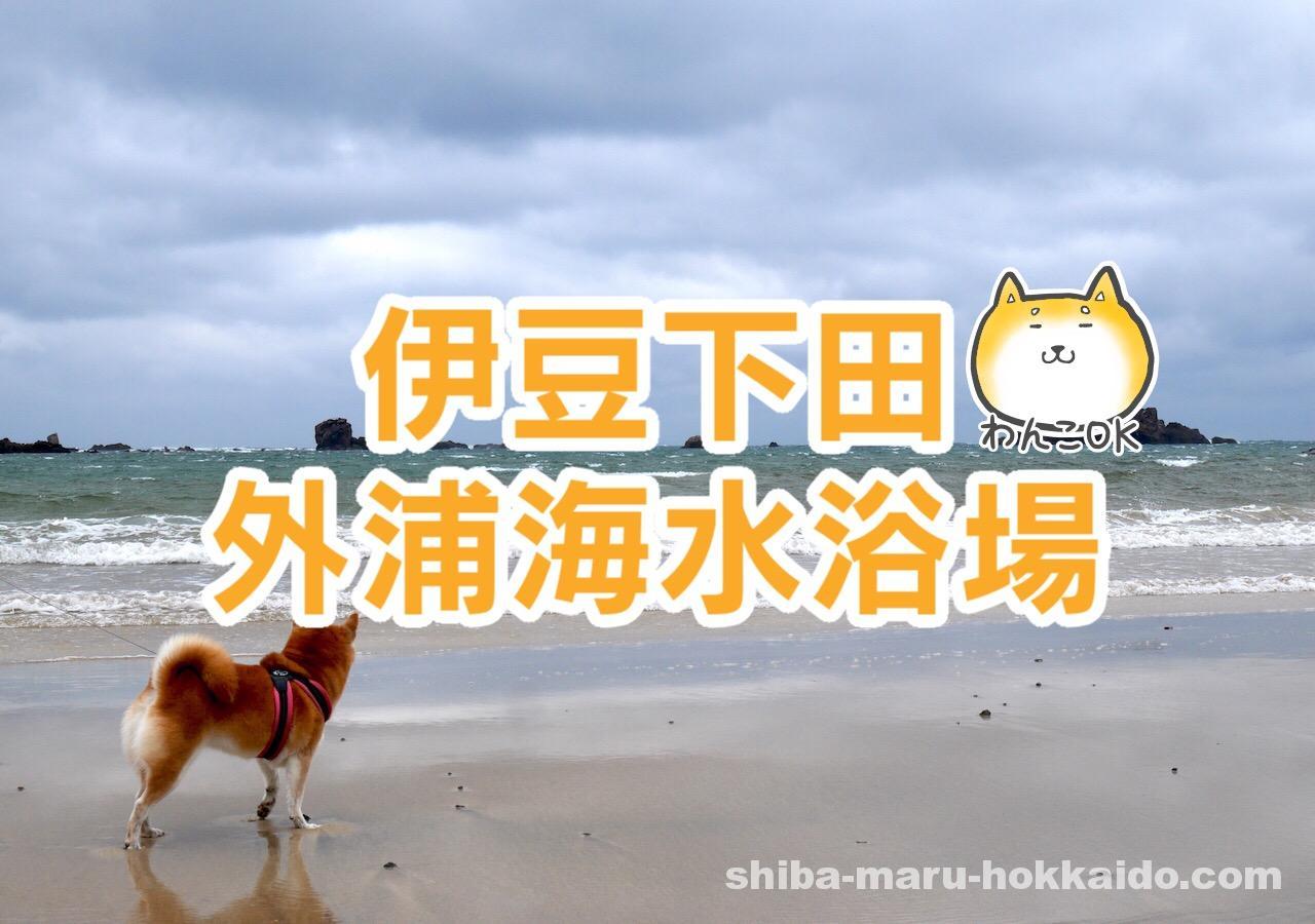 柴犬まると伊豆下田へ!外浦海水浴場をお散歩してみました!