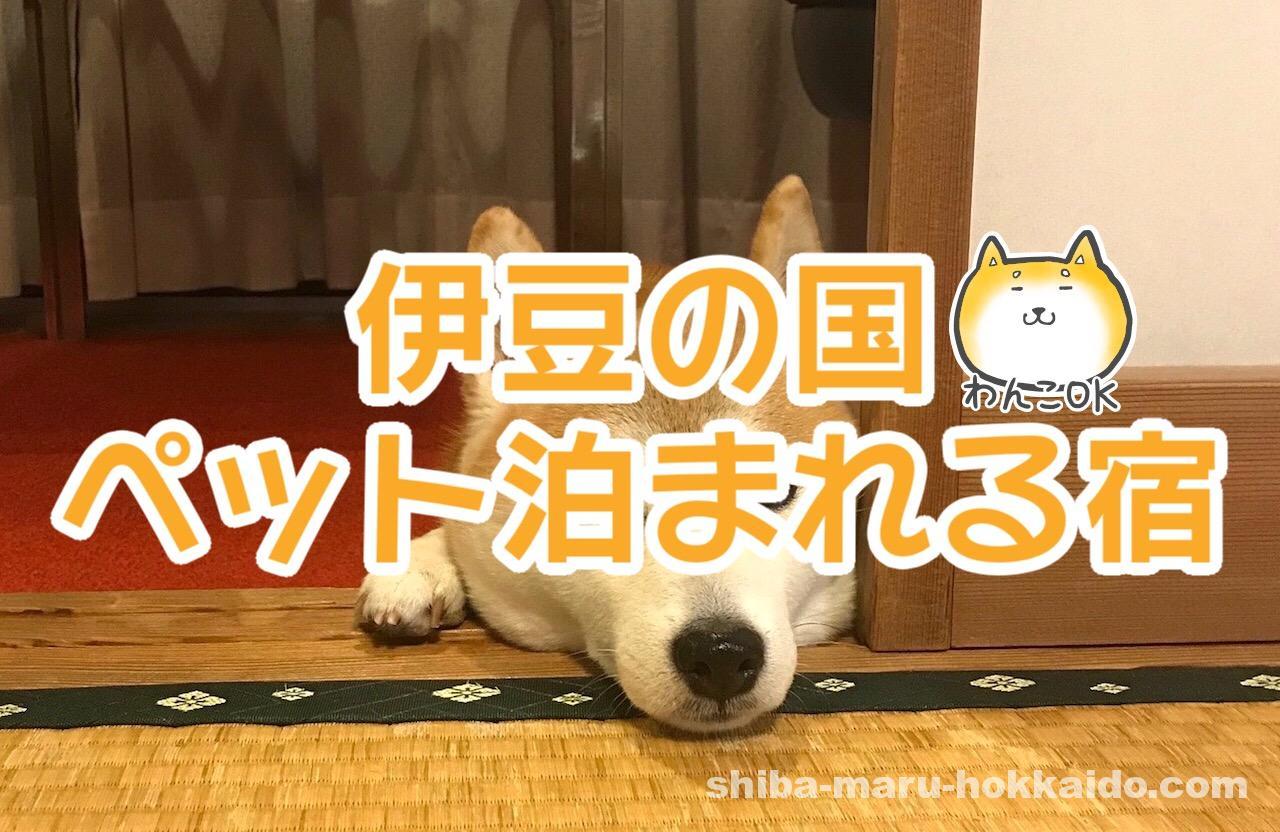伊豆の国市のペットと泊まれる宿「去来庵 松城館」に柴犬まるといってきました!