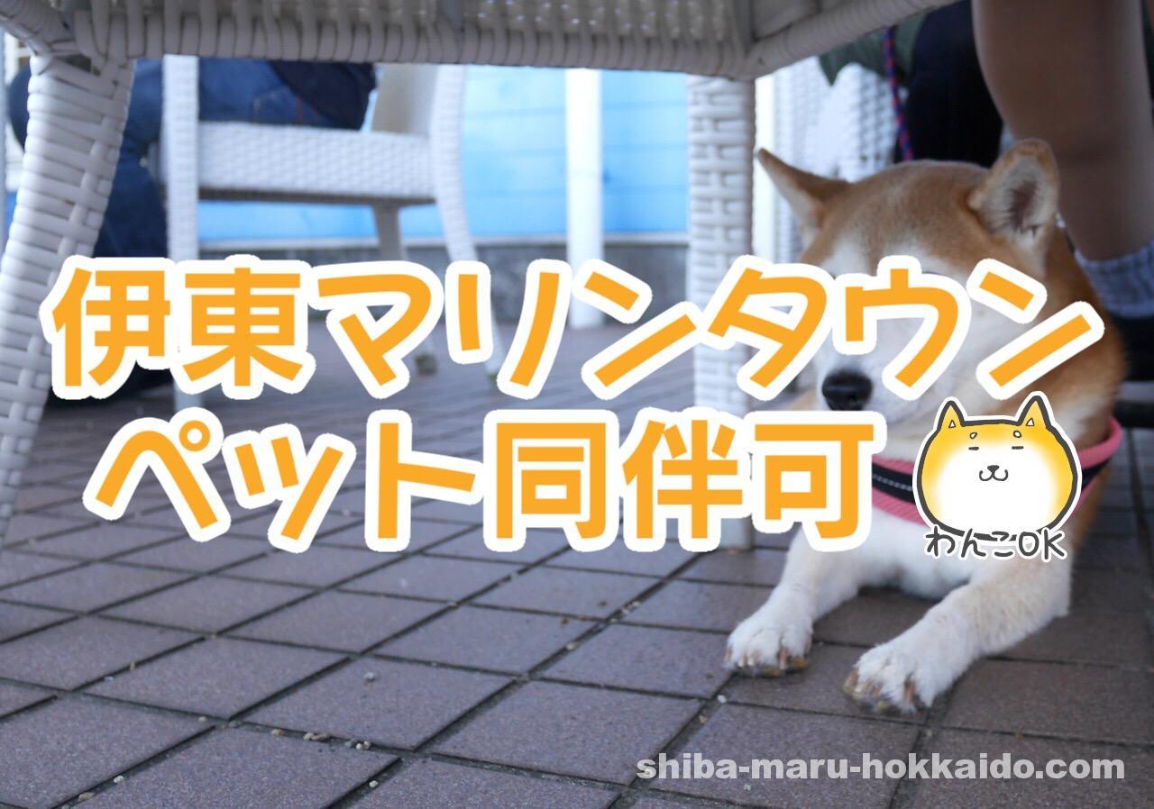 伊東マリンタウンの「伊豆高原ビール」テラス席で柴犬まるとランチをしてきました!