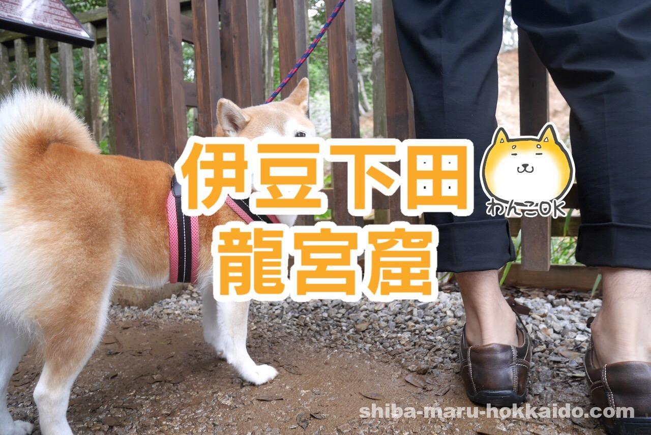 ペットと伊豆観光!「龍宮窟」で柴犬まるとジブリっぽい写真が撮りたい!