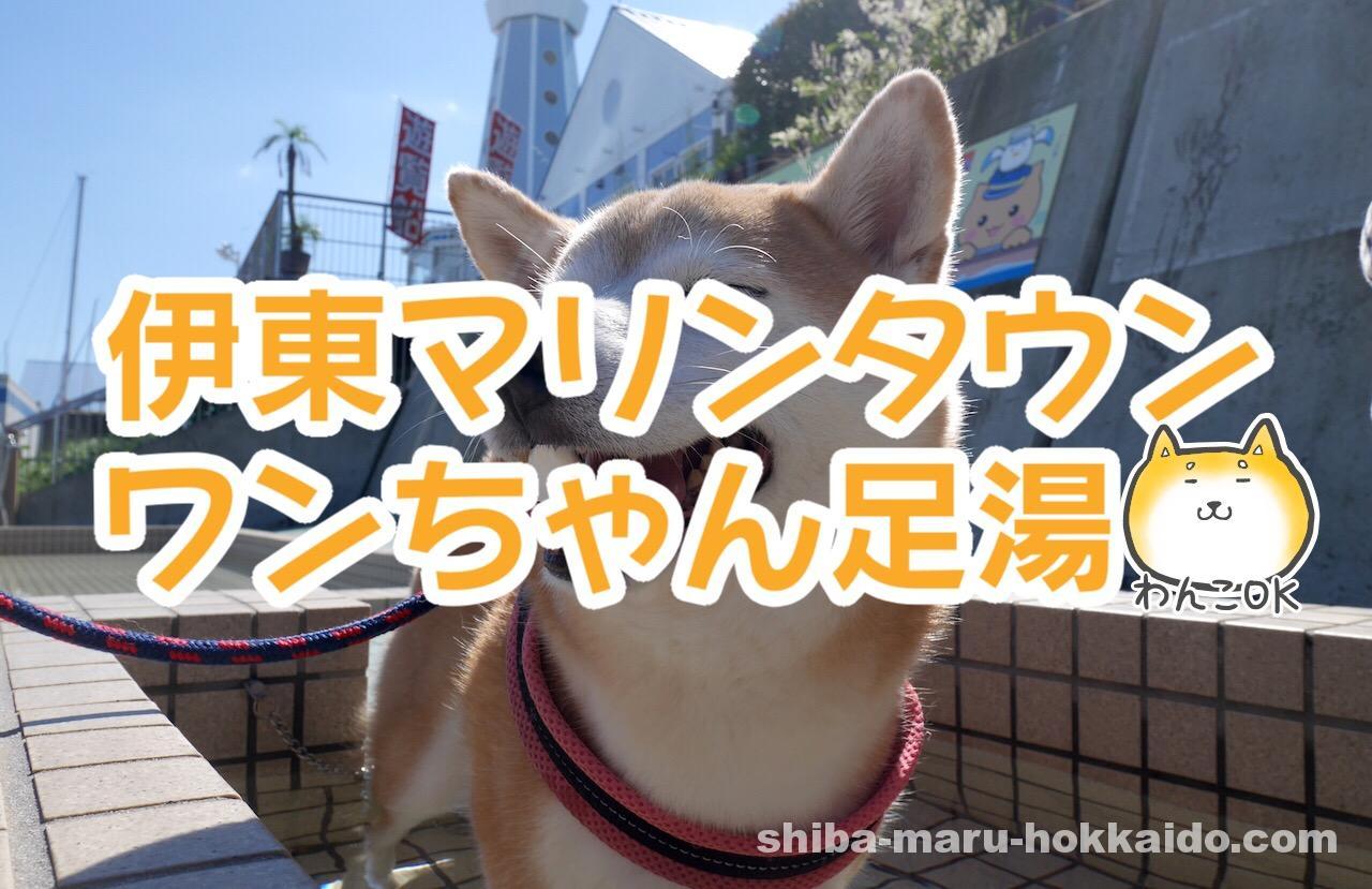 伊東マリンタウンで柴犬まると「ワンちゃんと楽しめる足湯」を初体験!