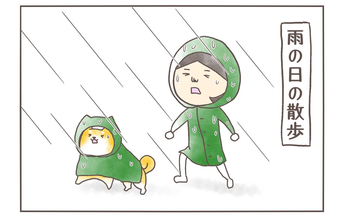 【柴犬4コマ】雨の日の散歩の後はお風呂場で恒例のアレをやる柴犬まるの話