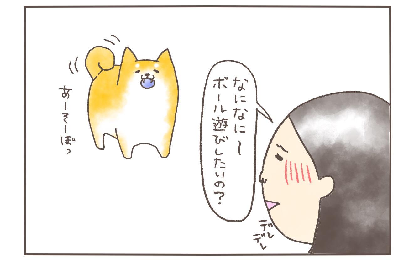 【4コマ・動画】柴犬まると飼い主のボール遊びは日々駆け引きである話