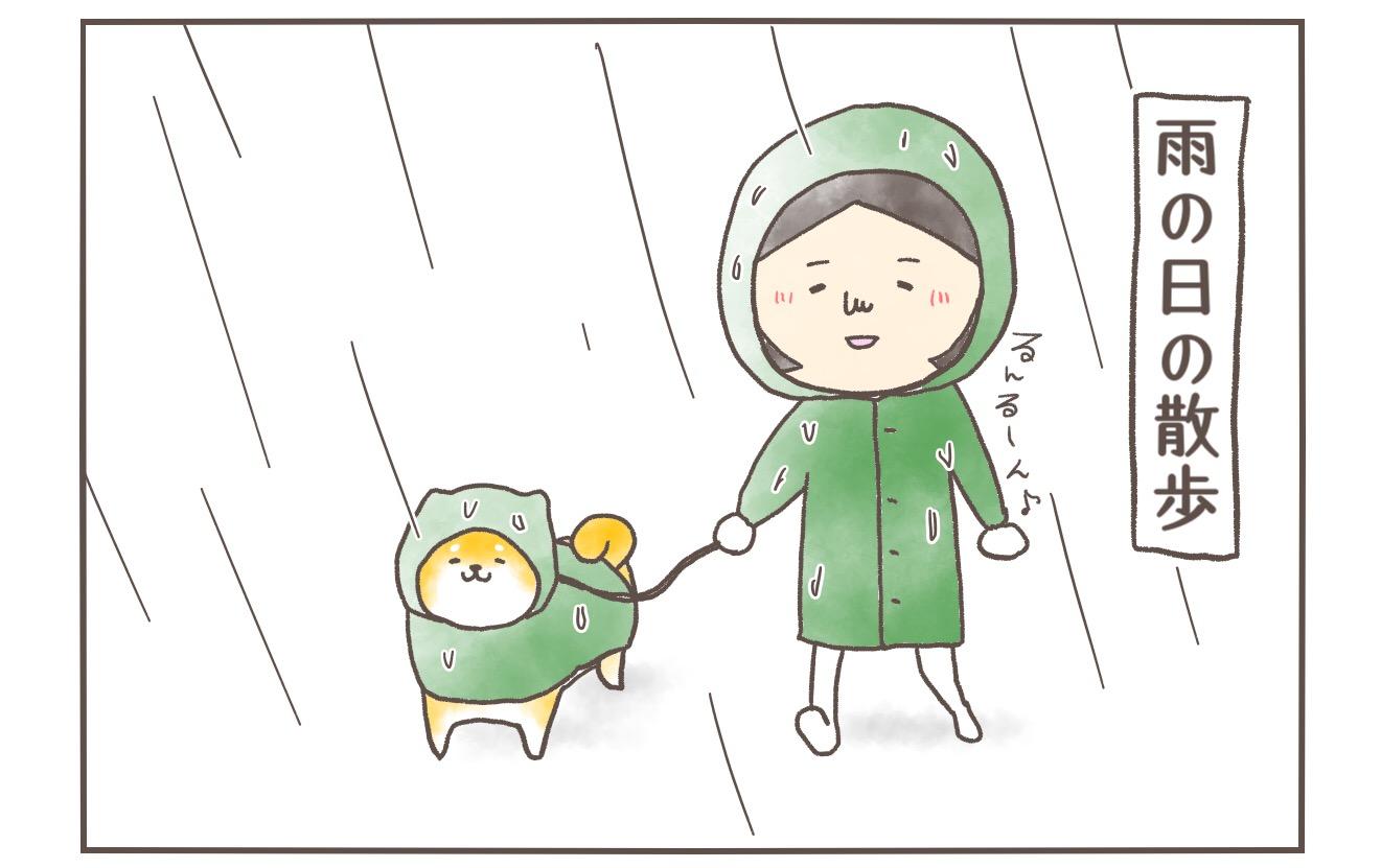 【柴犬4コマ】8年経ってやっとレインコートを着てくれた愛犬と飼い主の雨の日散歩事情の話