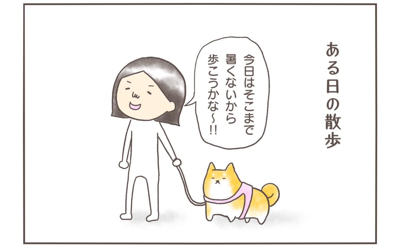 【柴犬4コマ】真夏の散歩で柴犬まるさんが賢すぎておったまげた話