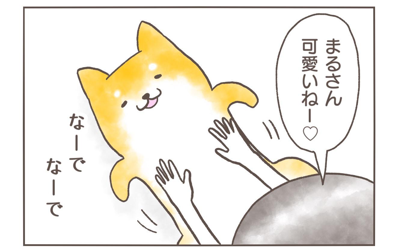 【柴犬4コマ】柴犬まるさんをひっくり返すとこうなるって話
